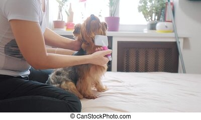 woman brushing her dog. dog funny video lifestyle . girl...