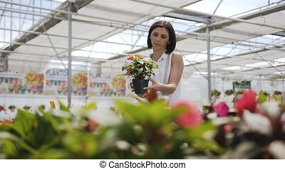 Woman Buying Flowers in a Garden Shop. Young woman shopping for decorative plants on a sunny floristic greenhouse market. Home and Garden concept.