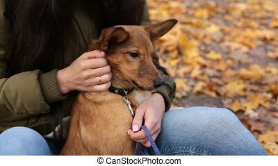 Woman caressing her cute dog gently in autumn park