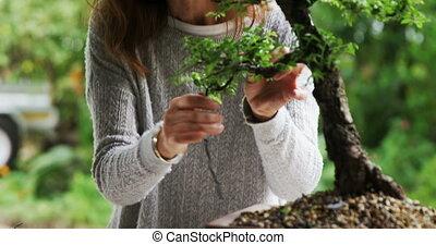 Woman checking bonzai plant 4k - Woman checking bonzai plant...