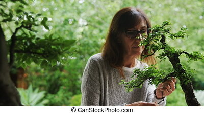 Woman checking bonzai plant 4k - Woman checking bonzai plant...