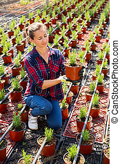 Woman checking potted rosemary