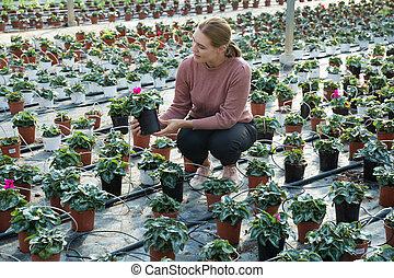 Woman checking quality of cyclamen