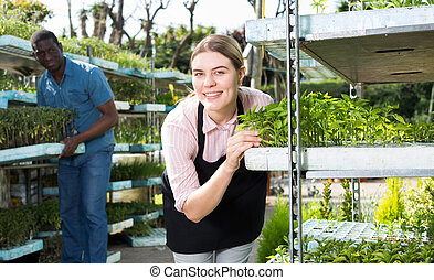 Woman checking seedlings in hothouse