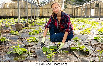 Woman checking squash seedlings