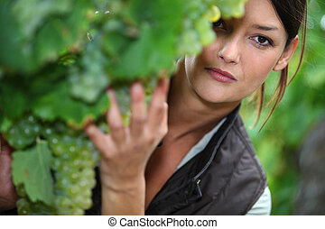 Woman checking the ripeness of grapes in a vineyard