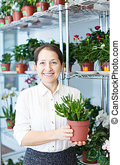 woman chooses Crassula at flower store