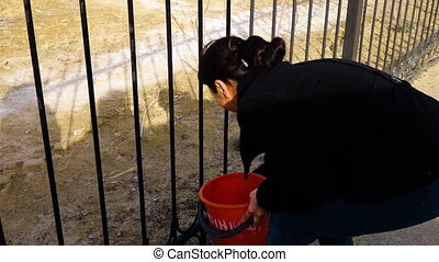 Woman cleaning a fence - A medium shot of a woman cleaning...
