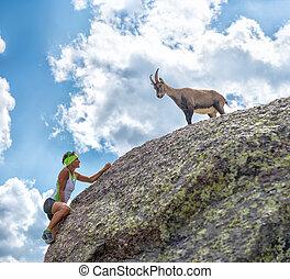 Woman climber encounters an ibex