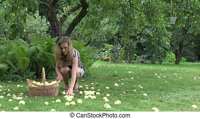 Woman collecting apples off the ground. 4K