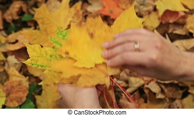Woman collects fallen autumn maple leaves.