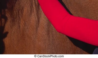 Woman combing horse comb. Slow motion. Close up - Woman...