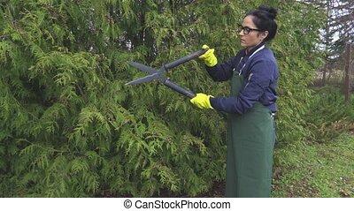 Woman cutting hedge of thuja
