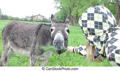 woman donkey feed grass