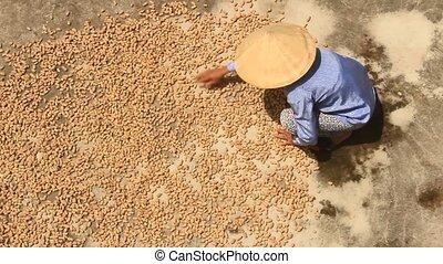 woman drying peanut