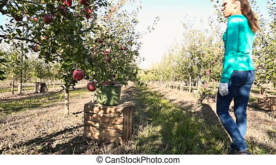 woman examines apple orchard