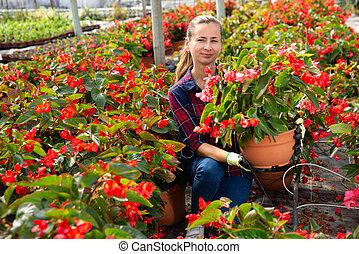 Woman farmer checking blooming begonias