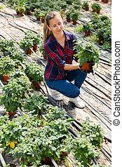 Woman farmer examining tomato seedlings