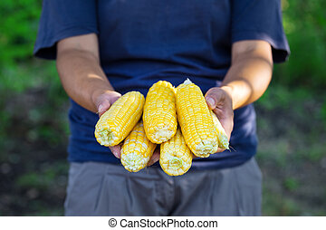 Woman farmer holding corncobs in her hands