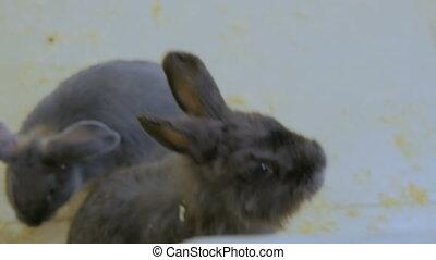 Woman feeding a rabbit in zoo