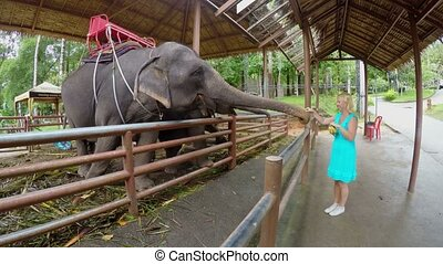 Woman feeding an elephant