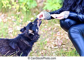 woman feeding dog in park