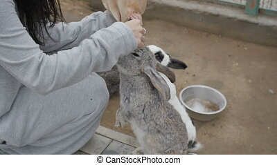 Woman feeding rabbits