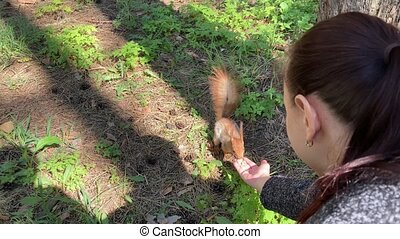 Woman feeding squirrel in forest. Squirrel jumping on ground to the hand with nuts. Timid animal taking food and eating it