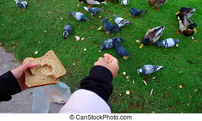 Woman feeding the birds in a park