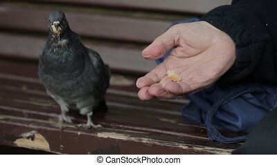 Woman feeds a pigeon from a palm