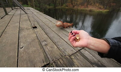 Woman Feeds a Squirrel on the Bridge - Woman treats wild...