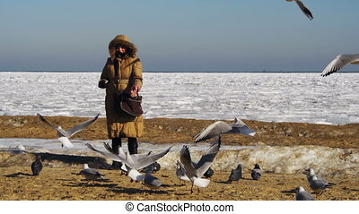 Woman Feeds the Hungry Seagulls Flying over the Frozen Ice-Covered Sea