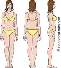 Woman figure - Vector illustration of female figure. Front,...