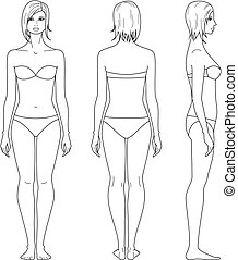 Woman figure - Vector illustration of female figure. Front,...
