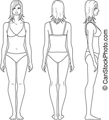 Woman figure - Vector illustration of female figure. Front, ...