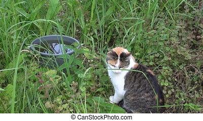 woman fish cat