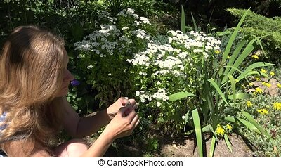 woman foretell tearing petals from the daisy blossom in park. 4K