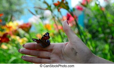 Woman frees the butterfly from her hand - Woman frees a...