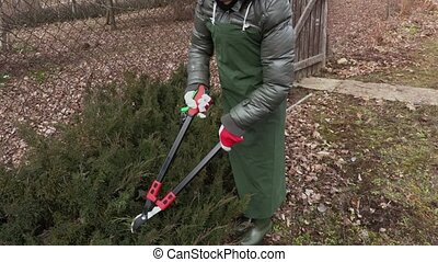 Woman gardener cutting edges of bushes