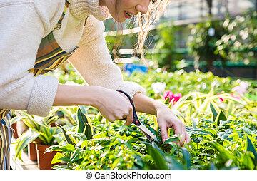 Woman gardener cutting plants with garden scissors in greenhouse
