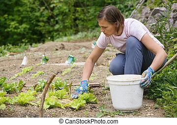 Woman gardener planting salad and mulching it - Woman...