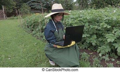 Woman gardener using laptop near the potatoes plants