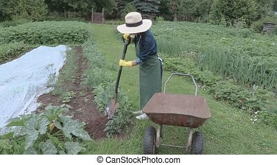 Woman gardener using spade shovel near wheelbarrow