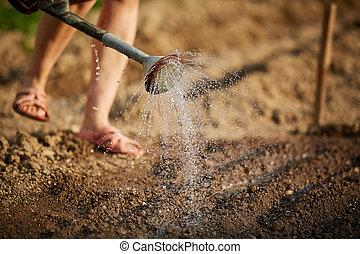 Woman gardener watering the soil - Woman gardener watering...