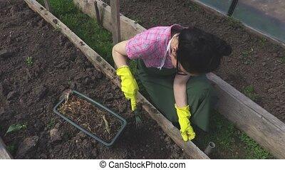 Woman gardener weeding the soil in greenhouse