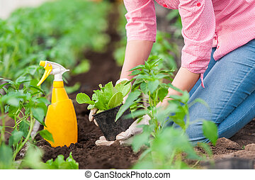 Woman gardener working on plants - Close up Woman farmer...
