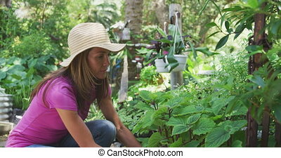 Woman gardening in a botanical garden - Side view of ...