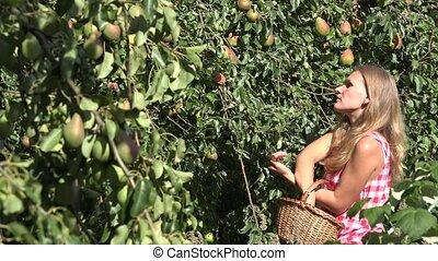 woman gather fresh pear fruit in basket in summer garden. 4K
