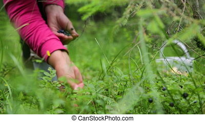 Woman gathering berries in forest
