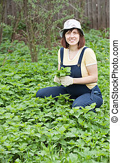 Woman gathers nettle at spring garden